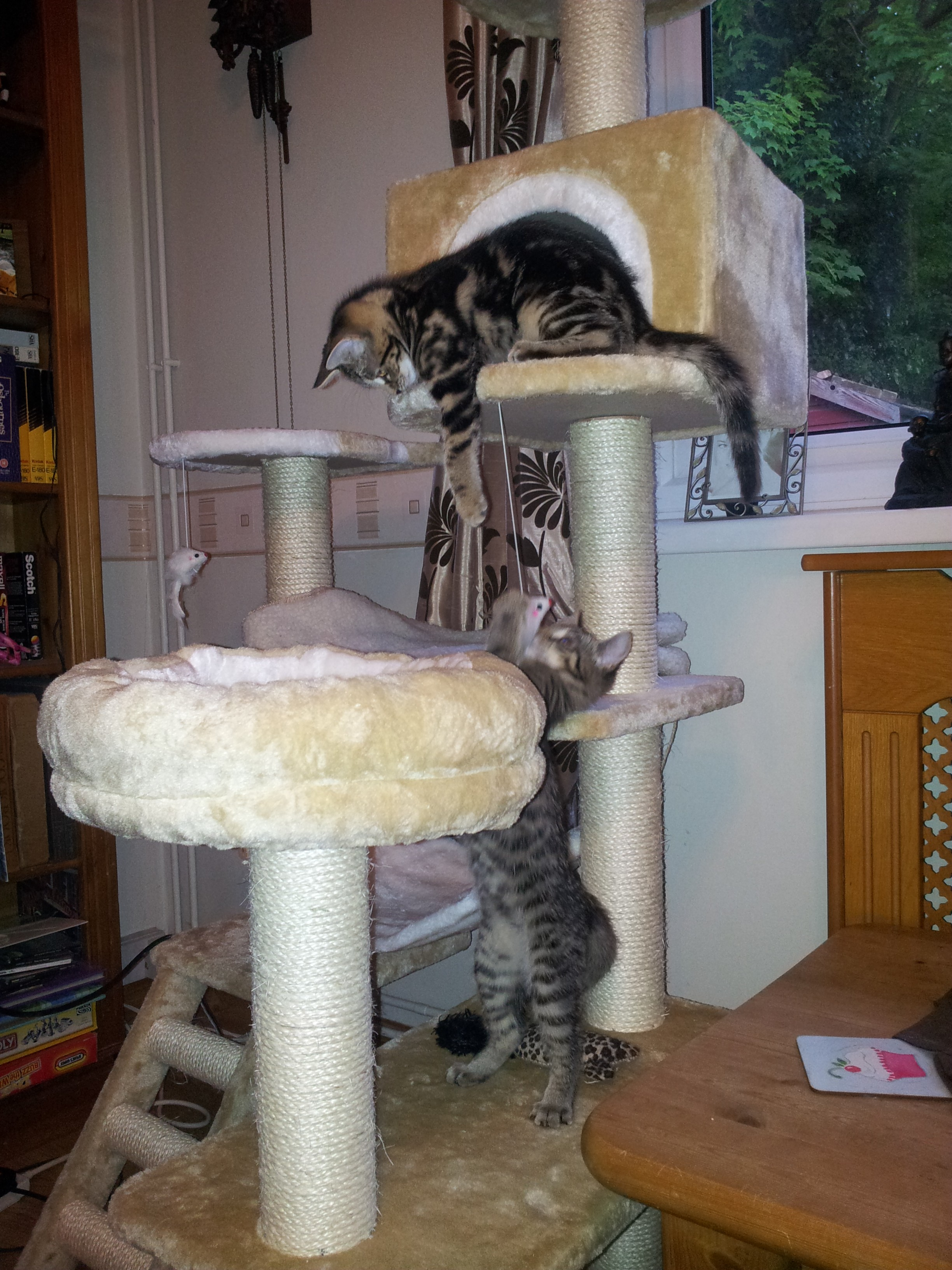 Kitty Towers